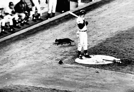 The 1969 Cubs were cursed by a black cat and missed the playoffs.