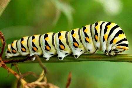 caterpillar-4